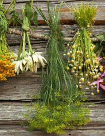 How Can Herbs Help Alzheimer's?